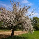 Baum in Nellingen